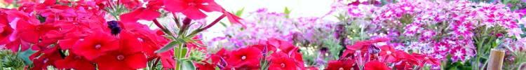 flower-9.jpg Guluna central Asia