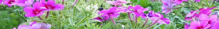 flower-10.jpg Guluna central Asia
