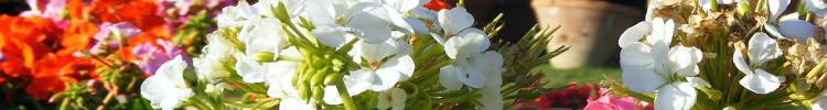 flower-4.jpg Guluna central Asia