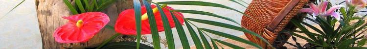 ikebana-karachi.jpg Guluna central Asia